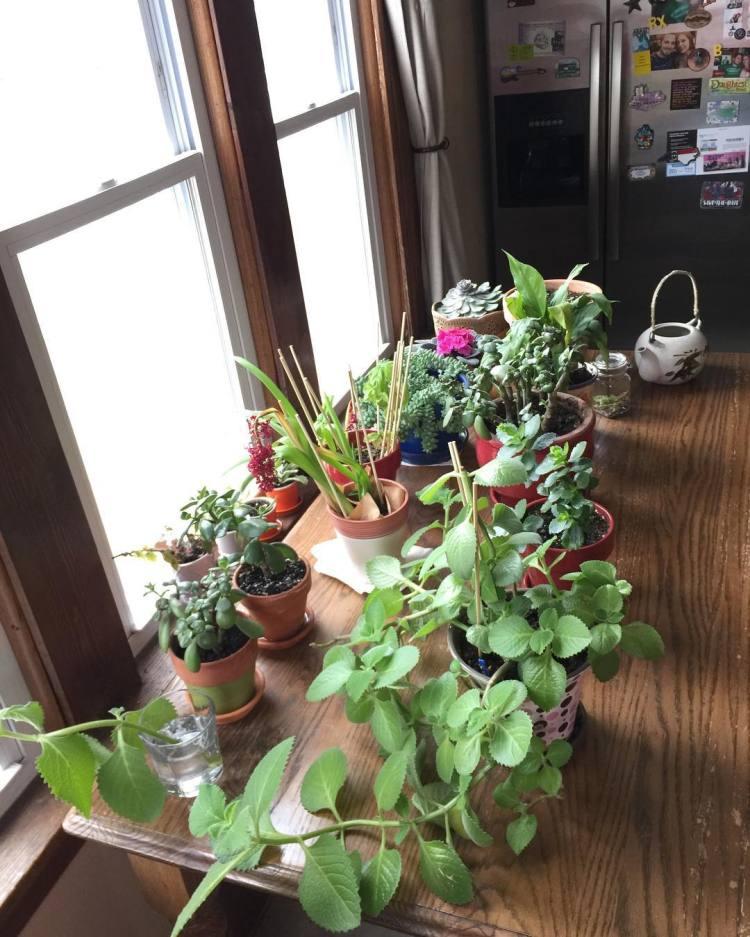 It's about the little things ❤🌱🌵🌸 #lovelife #littlethingsinlife #indoorgarden #shieldsgarden #herbsgarden #growinggarden