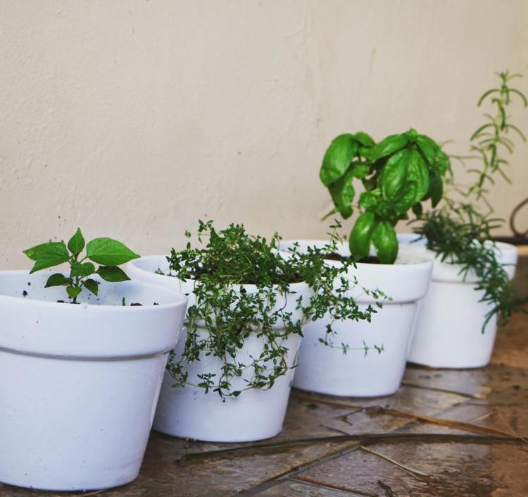 Simple Kitchen Herb Garden