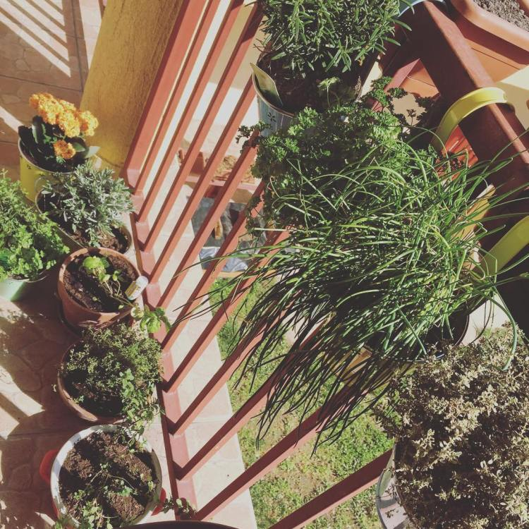 #ganggarden #towngarden #garden #herbs #herbsinthecity #herbsgarden #hun #hungary