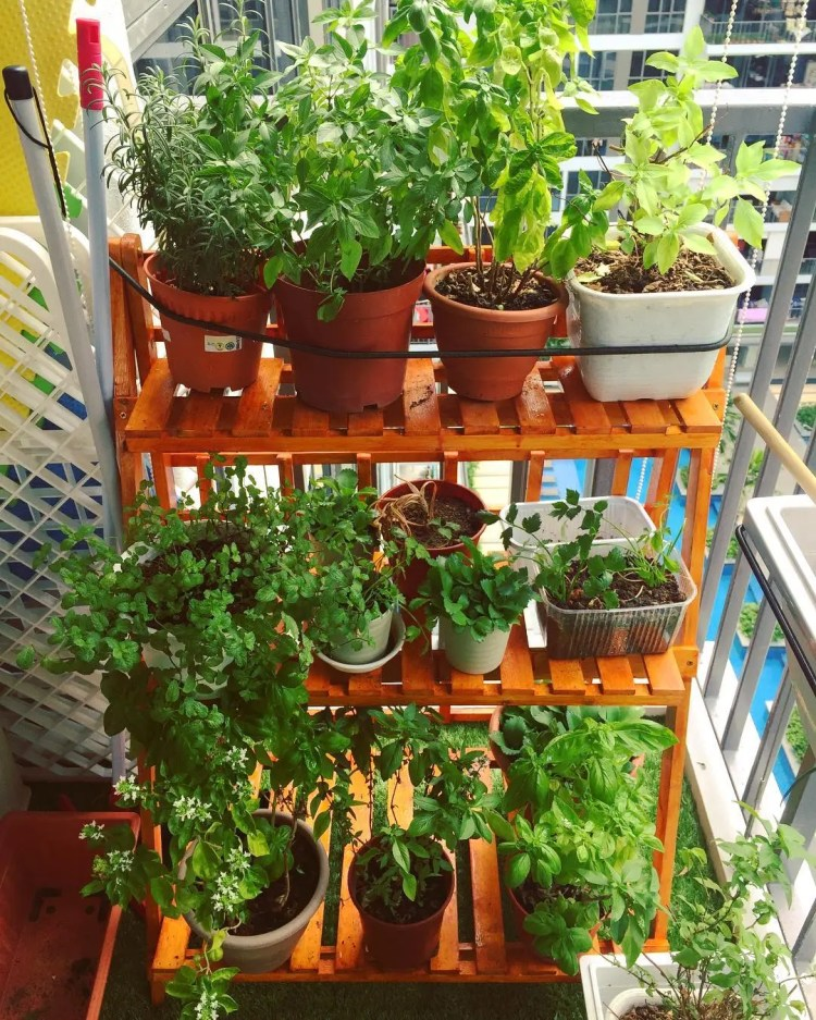 46 Incredibly Simple DIY Herbs Garden Ideas for Kitchen
