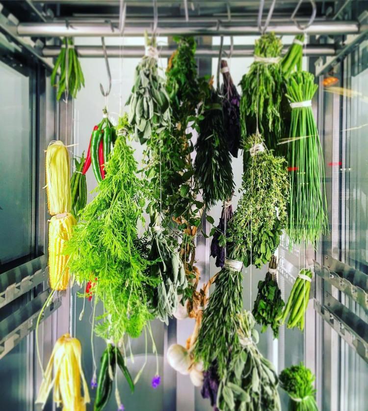 #herbsgarden #dryingoff