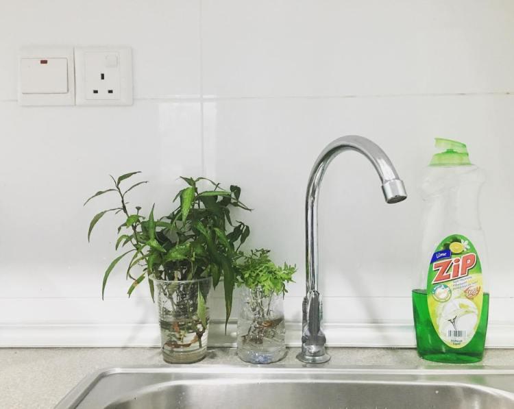 Simple DIY Herbs Garden Ideas for Kitchen