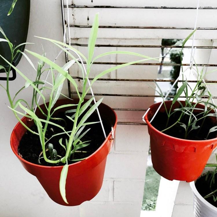 #minigarden #herbsgarden