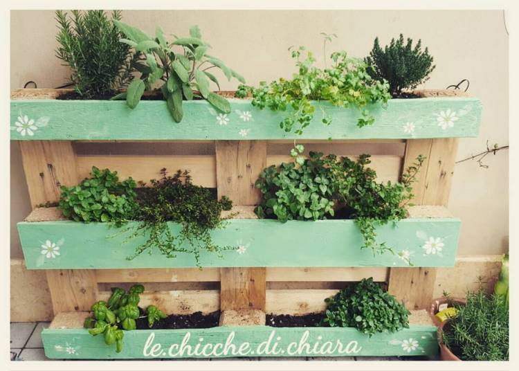 #orticello #rosemary #thyme #basil