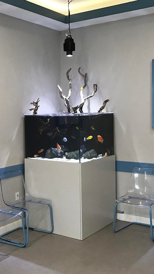 Checking up on this open top freshwater aquarium