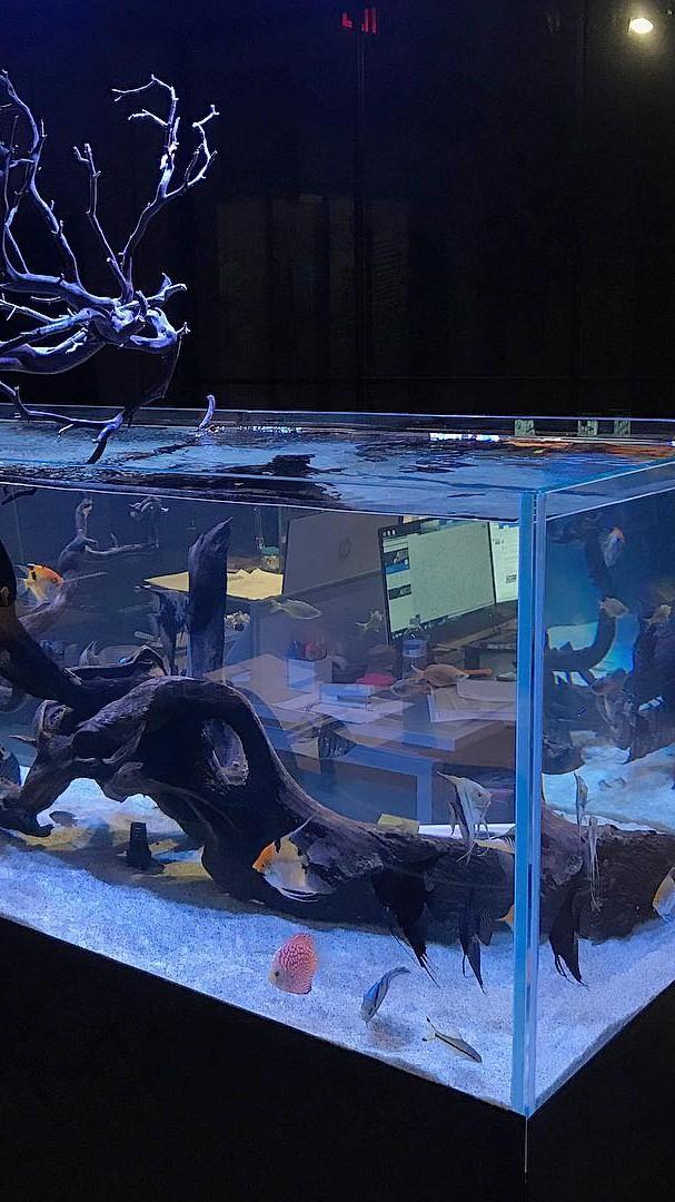 Freshwater open top aquarium