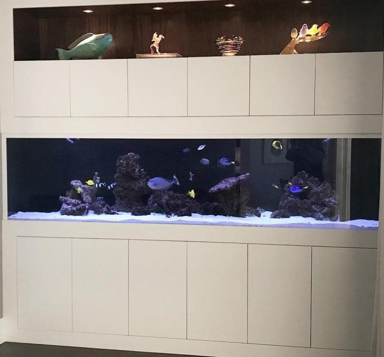 Saltwater aquarium, Queens NY.