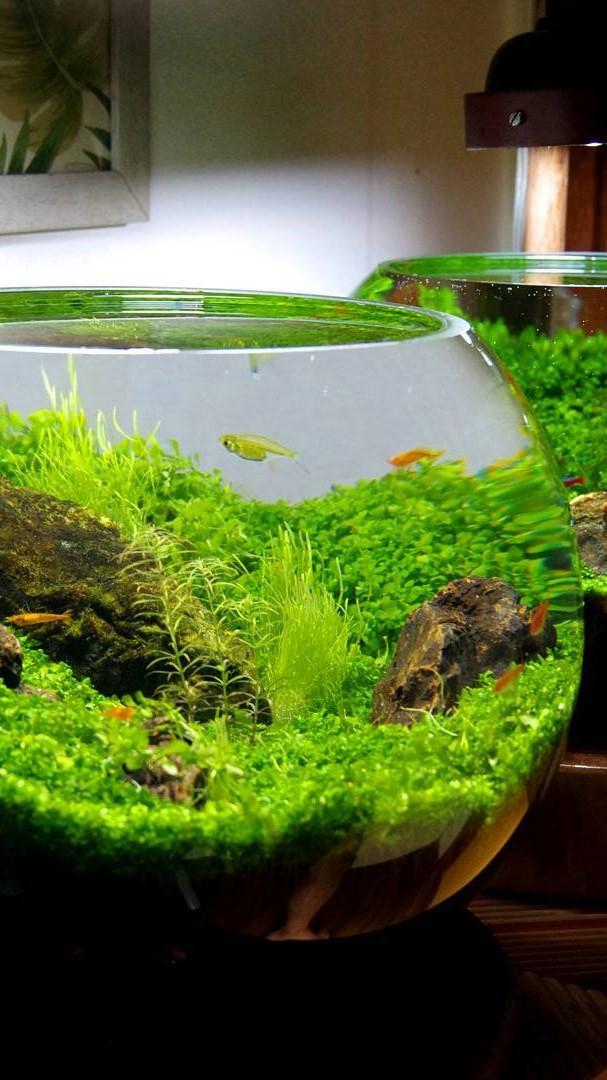 bottle aquariums