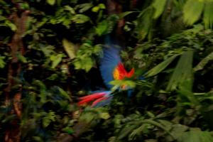 The Birds of the forest in Ecuador