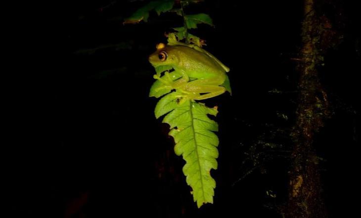 Ecuador Wildlife Trip Report