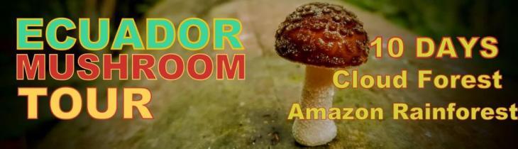 Ecuador Mushroom Trip