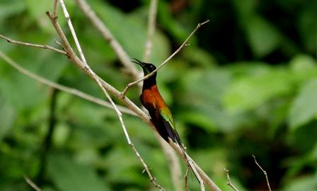 Ecuador Hummingbird Experience
