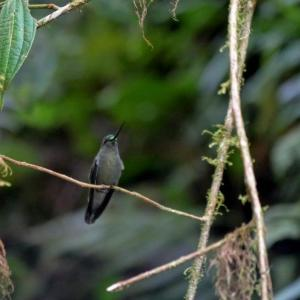 Baeza Birdwatching in Ecuador
