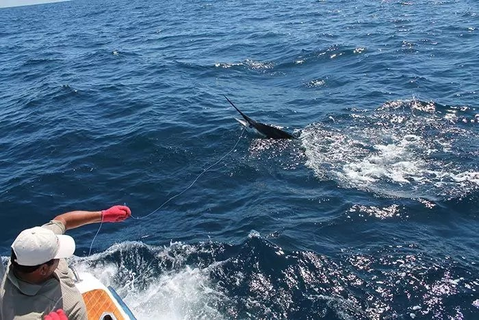 2016 – Marlin Report First Days of August