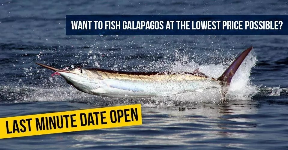 Fishing Galapagos January 2017 Open Dates Last Minute Special Price!
