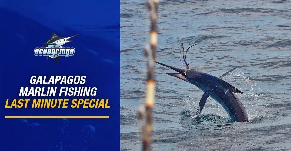 Galapagos Marlin Fishing Last Minute Special