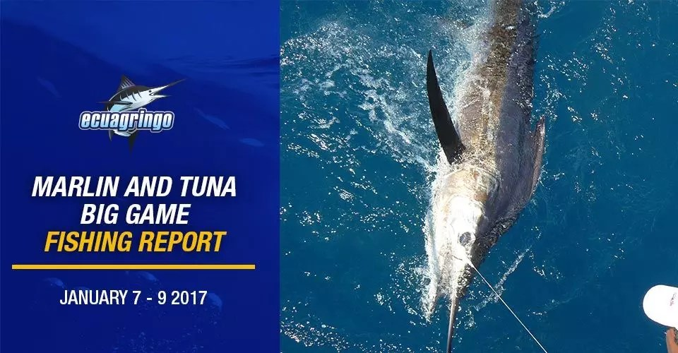 Ecuagringo Marlin and Tuna Big Game Fishing Report