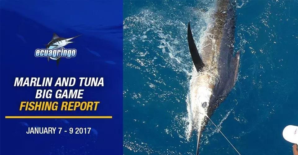 Ecuagringo Marlin and Tuna Big Game Fishing Report