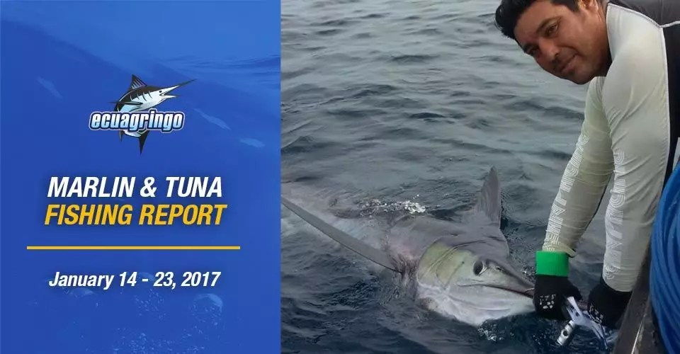 Marlin & Tuna Fishing Report – January 14 – 23, 2017