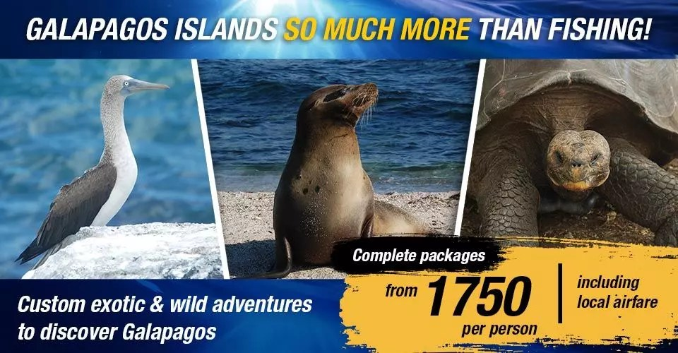 Galapagos Islands So Much More Than Fishing