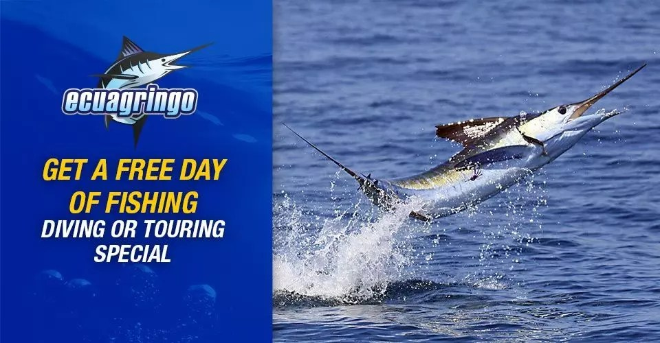 Get a Free Day of Fishing, Diving or Touring Special