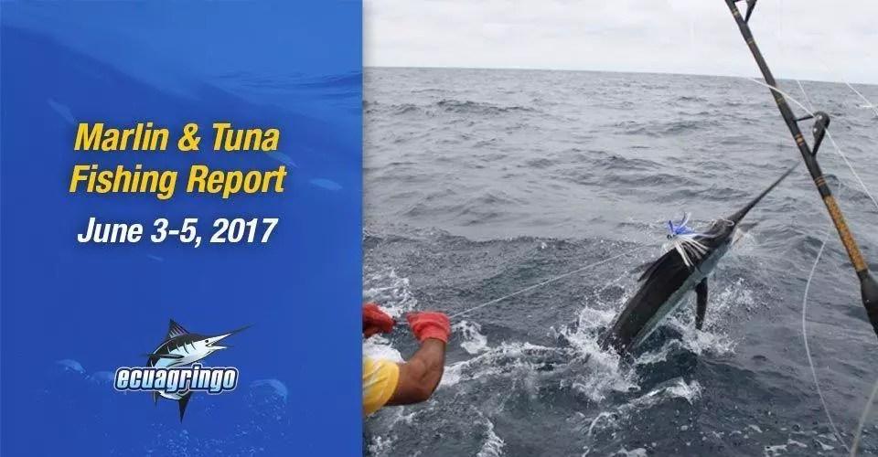 Ecuagringo Marlin & Tuna Report, June 3-5, 2017