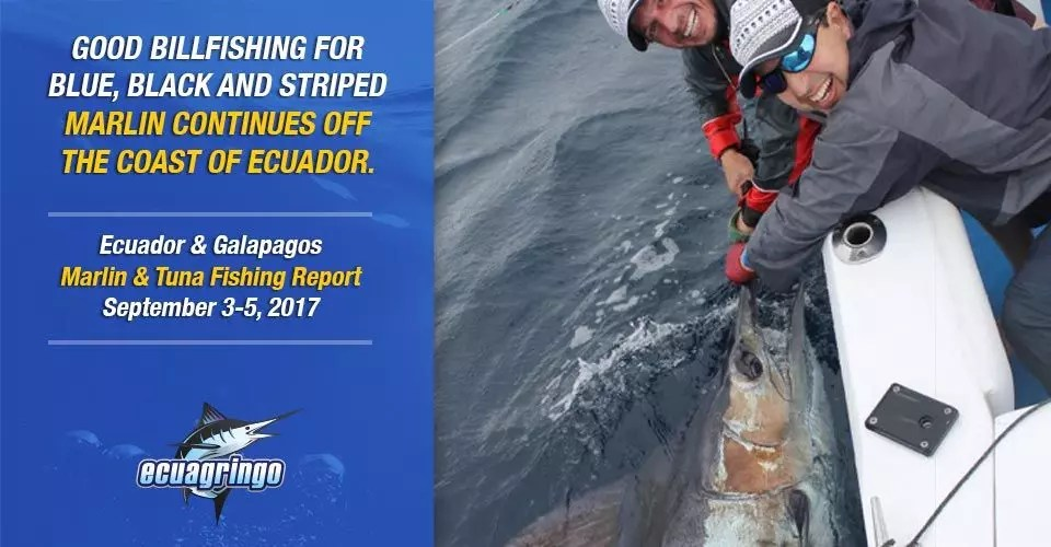 Good billfishing for blue, black and striped marlin continues off the coast of Ecuador.