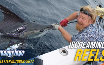 Blue Marlin Massing In Manta, Ecuador Makes For The Most Consistent Fishery Year Round