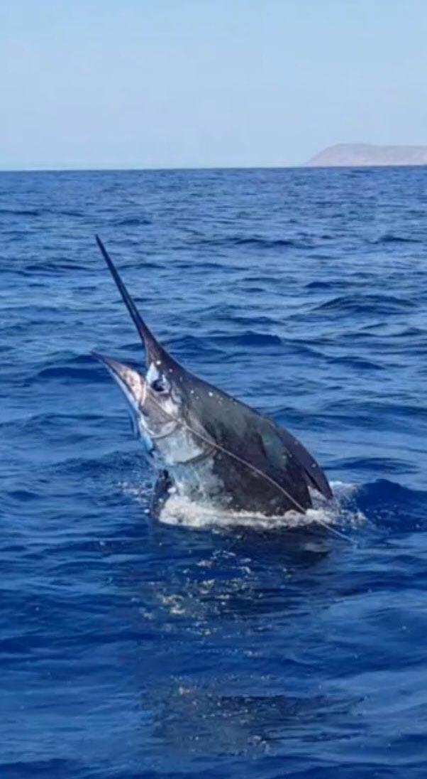 fishing reports 20180115 marlin tuna wahoo swordfish ecuador galapagos manta 05