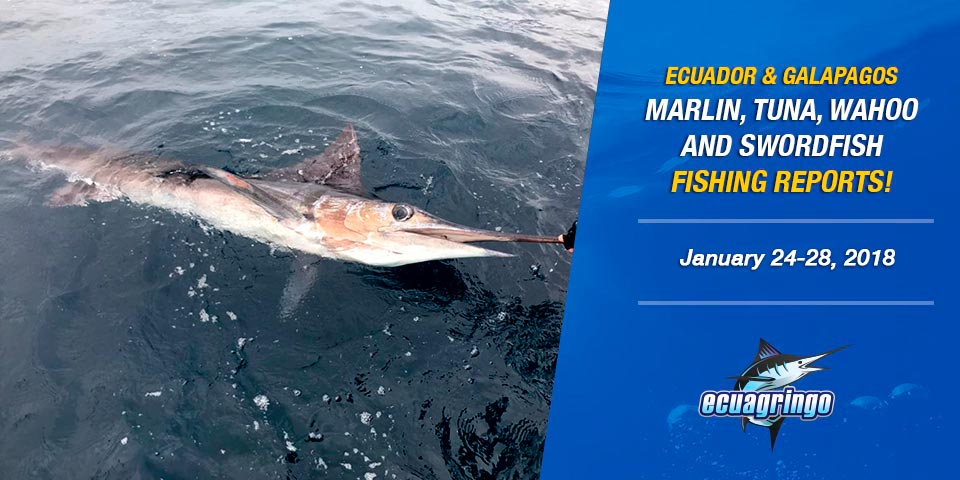fishing reports 20180128-marlin-tuna-wahoo-swordfish-ecuador-galapagos-manta-01