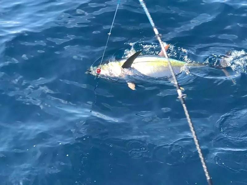fishing reports 20180302 marlin tuna wahoo swordfish ecuador galapagos manta 02