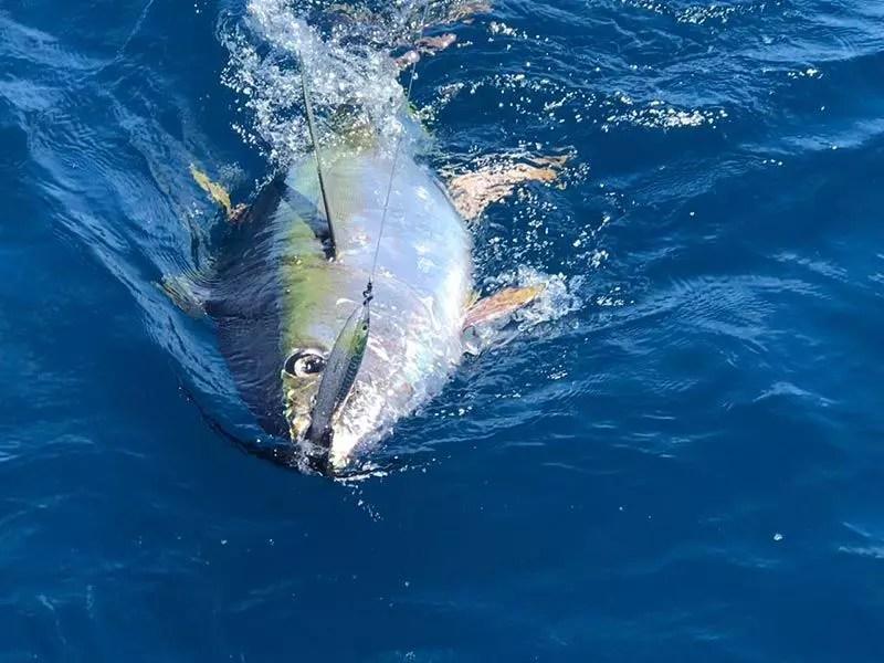fishing reports 20180302 marlin tuna wahoo swordfish ecuador galapagos manta 03