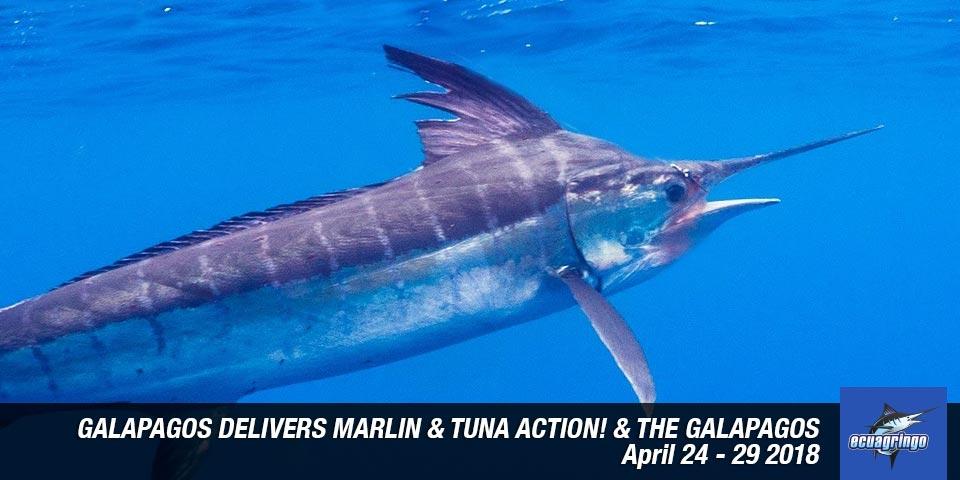 fishing reports 20180501 marlin tuna wahoo swordfish ecuador galapagos manta 01