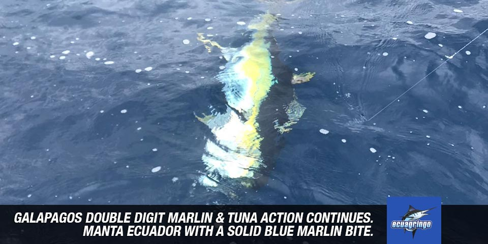 fishing reports 20180528 marlin tuna wahoo swordfish ecuador galapagos manta 00