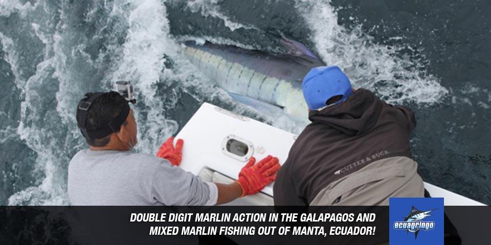 fishing reports 20180612 marlin tuna wahoo swordfish ecuador galapagos manta 00