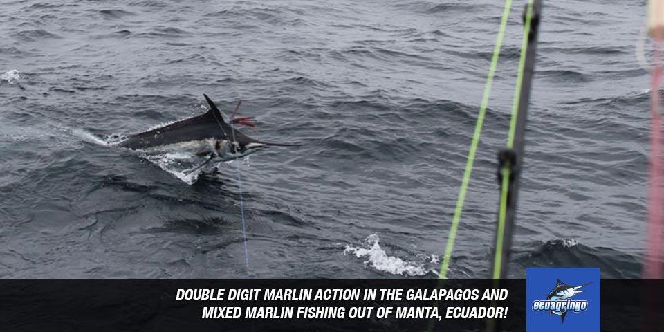 fishing reports 20180618 marlin tuna wahoo swordfish ecuador galapagos manta 00