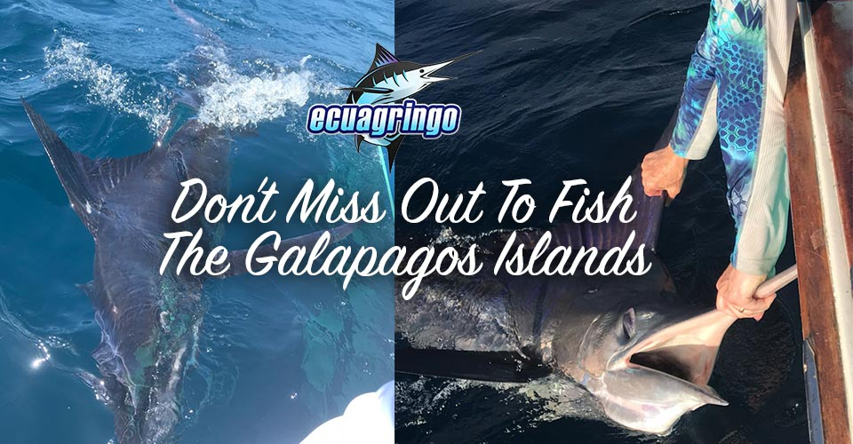 newsletter 20180625 galapagos islands 01