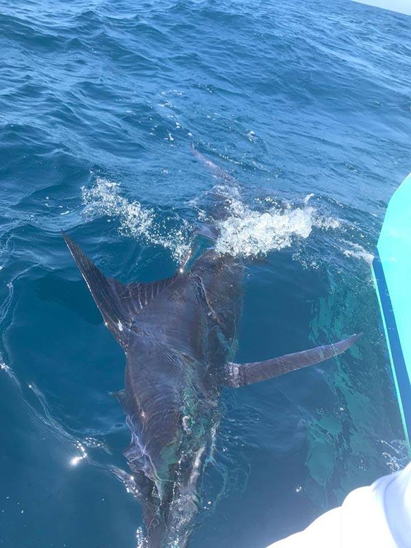 fishing reports 20180604 marlin tuna wahoo swordfish ecuador galapagos manta 05