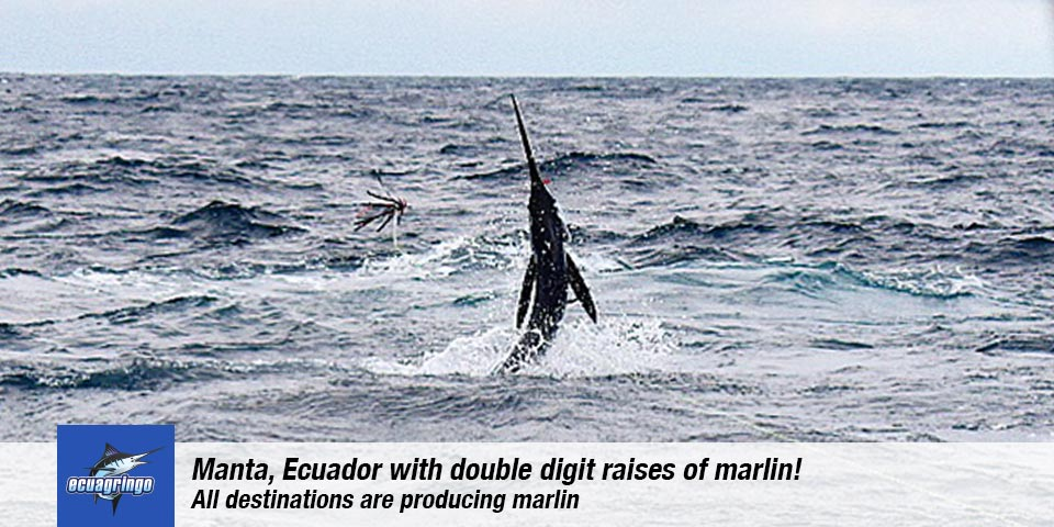 fishing reports 20180920 marlin tuna wahoo swordfish ecuador galapagos manta 00
