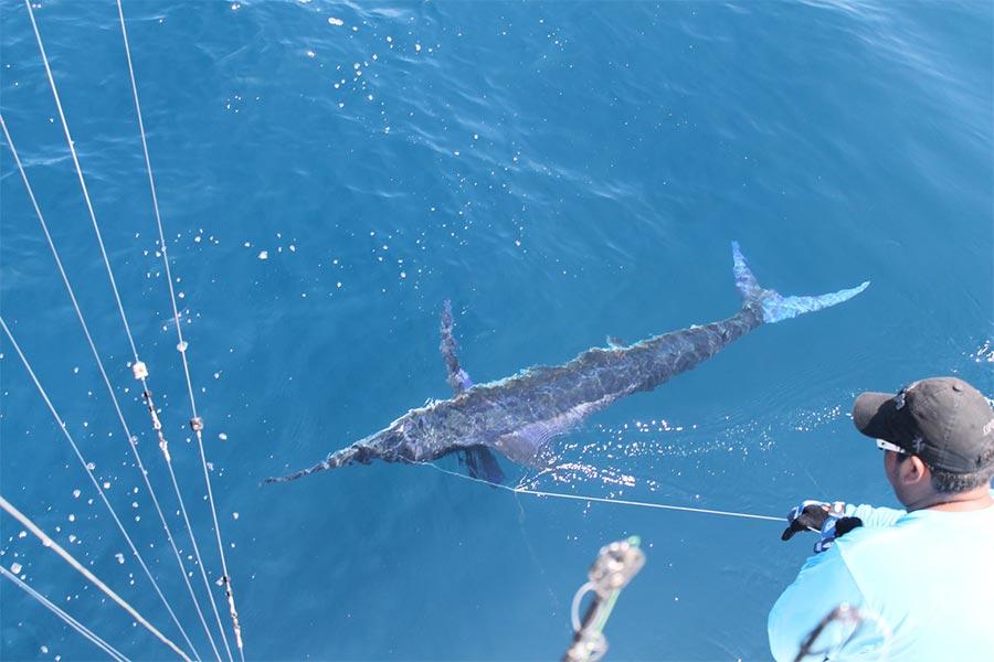 promotion 20180902 marlin tuna wahoo swordfish ecuador galapagos manta 01