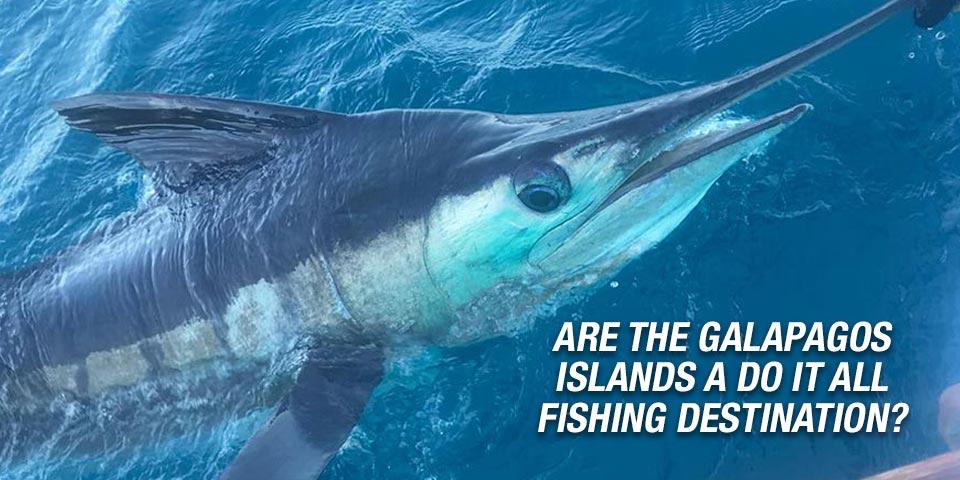 promotion 20181002 marlin tuna wahoo swordfish ecuador galapagos manta 00