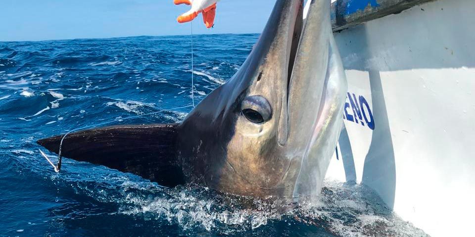 marlin fishing 20190219 galapagos 01
