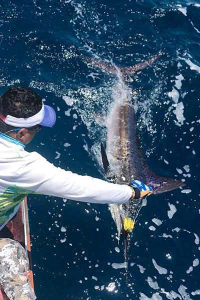 marlin fishing report 20190306 galapagos kessinger 02