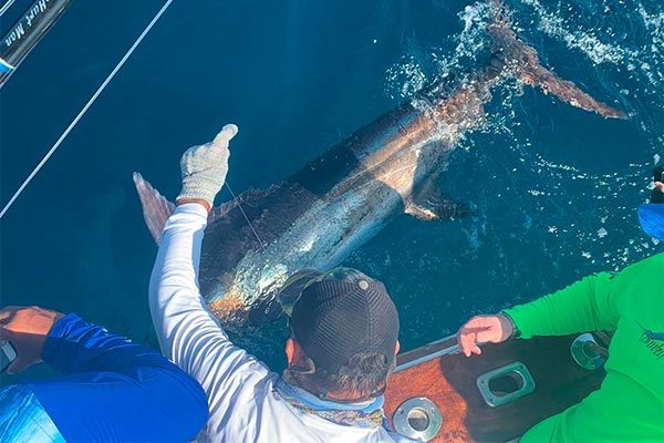 marlin fishing report picture 20190325 02