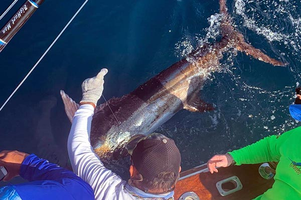 marlin fishing isabela galapagos islands back 01