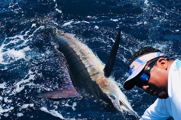 ecuagringo marlin fishing report 20190822 03