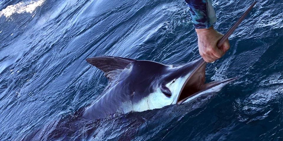 promotion marlin fishing 20190902 01