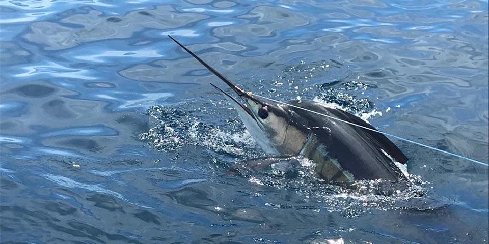 promotion marlin fishing 20191121 01