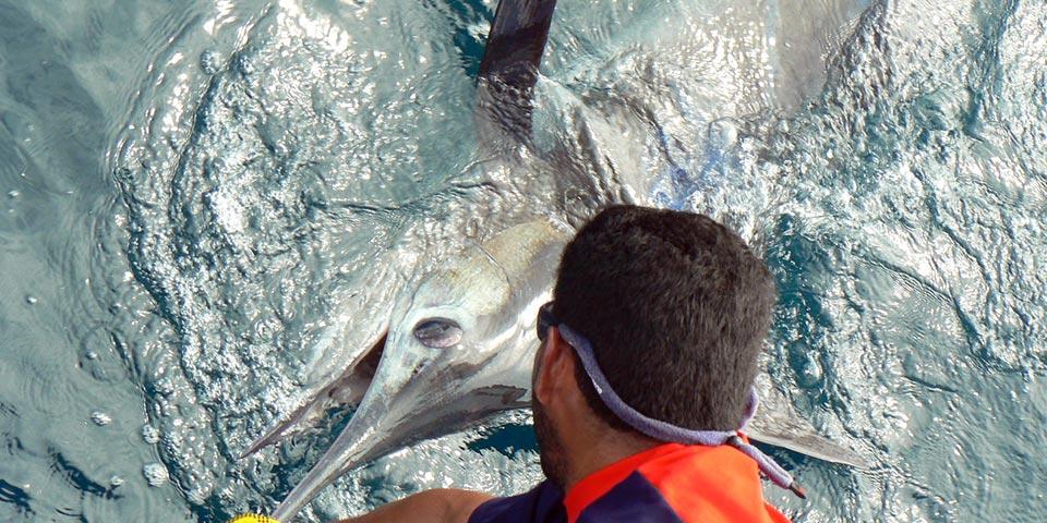 ecuagringo marlin fishing report 20191210 01