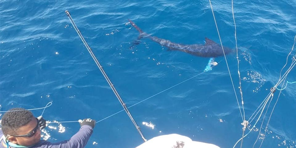 ecuagringo marlin fishing report 20191215 01
